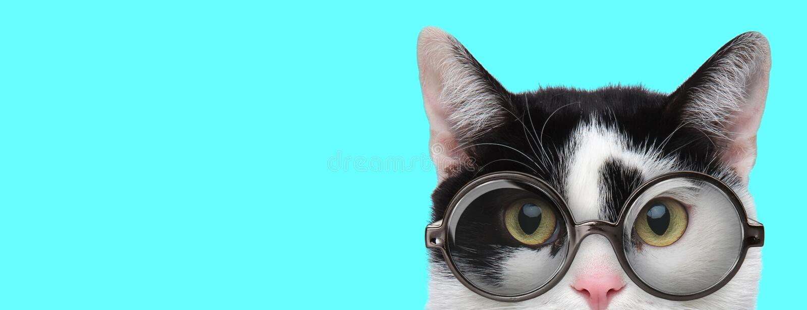 Metis cat wearing eyeglasses with only half of face exposed stock photos