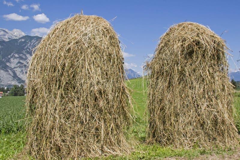 Metodo di essiccazione e di erba di conservazione immagine stock libera da diritti