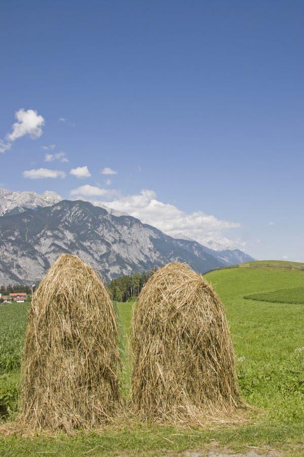 Metodo di essiccazione e di erba di conservazione immagine stock