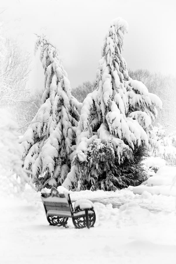 Metraggio di paesaggio di inverno nel parco con gli alberi pieni di neve fotografie stock libere da diritti