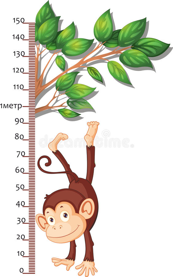 Metro para medir crecimiento con un mono ilustraci n del - Metro para medir ...