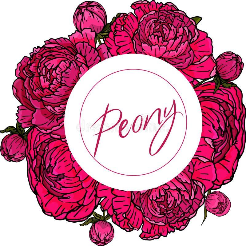 Metta con i fiori ed i germogli della peonia su un fondo bianco fotografia stock