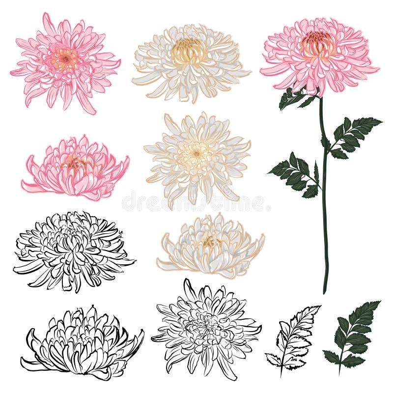 Metta degli elementi del fiore del crisantemo nella progettazione di vettore Umore tirato disponibile di stile giapponese illustrazione vettoriale