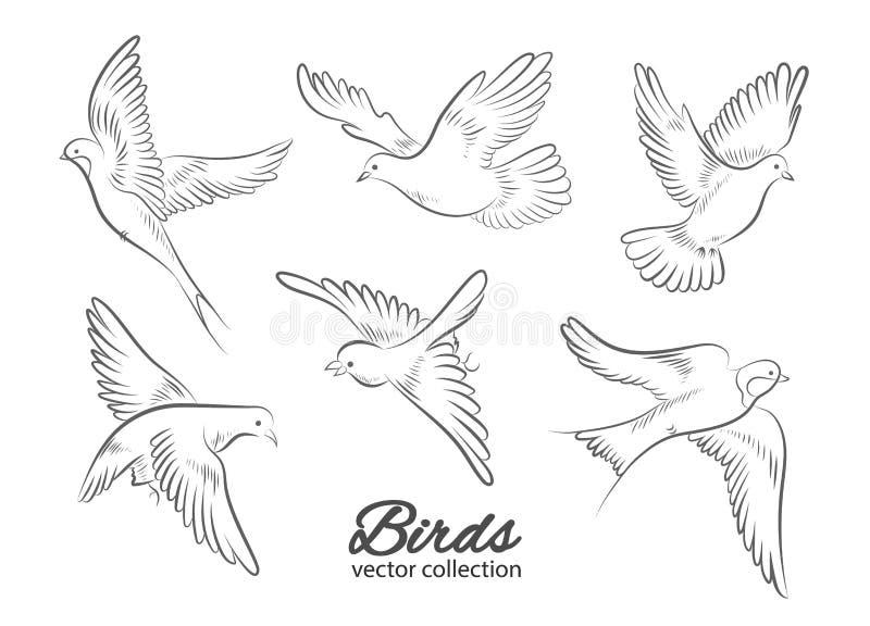 Metta degli uccelli disegnati a mano isolati su fondo bianco Illustrazione di vettore illustrazione vettoriale