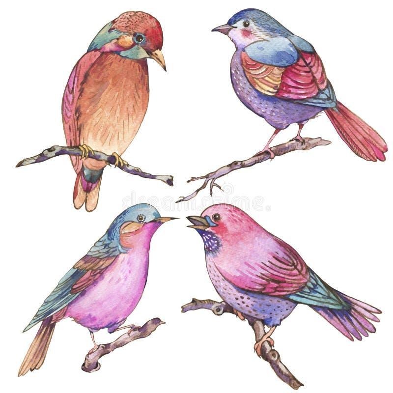Metta degli uccelli variopinti degli acquerelli isolati su fondo bianco illustrazione vettoriale