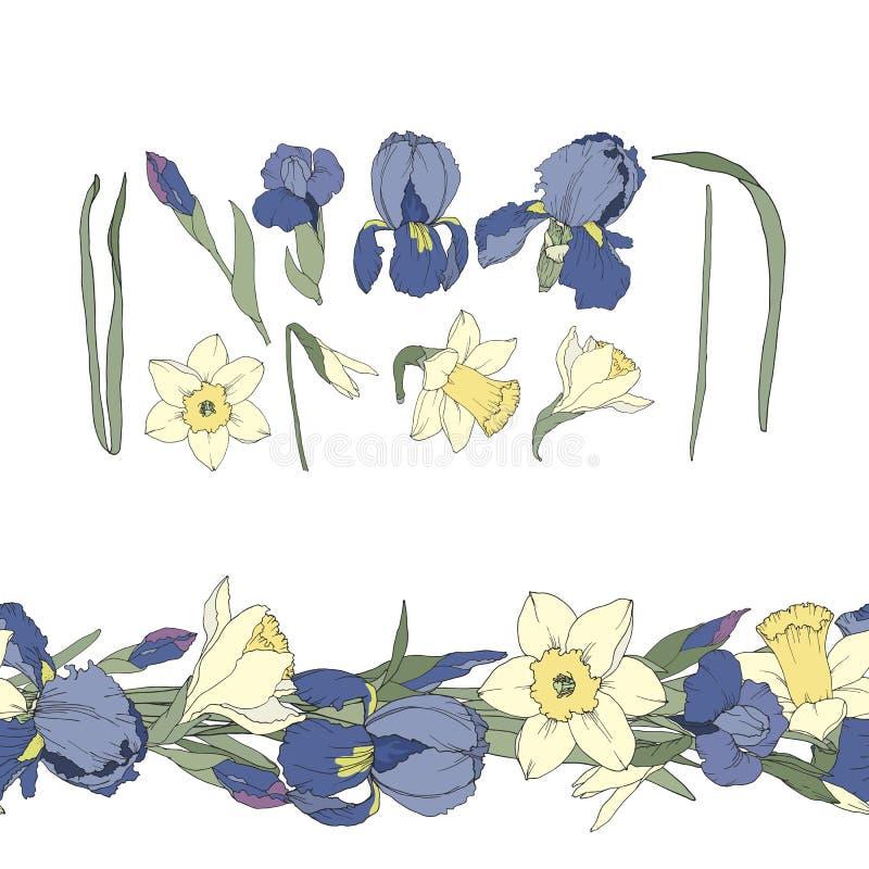 Metta dei fiori senza cuciture del confine e dell'iride e del narciso royalty illustrazione gratis