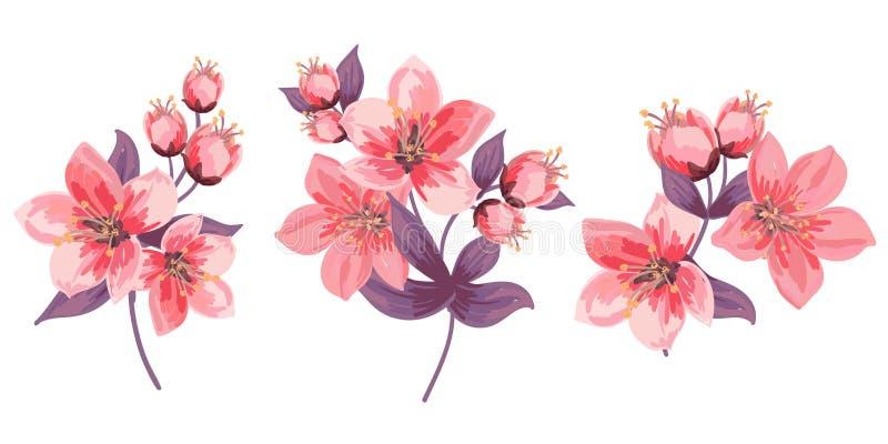 Metta dei rami di fioritura Fiori e fogli dentellare Germogli delicati e fiori di fioritura Isolato Cherry Blossoms illustrazione vettoriale