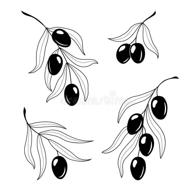 Metta dei rami di ulivo disegnati a mano per l'autoadesivo di progettazione, l'etichetta, etichetta immagini stock