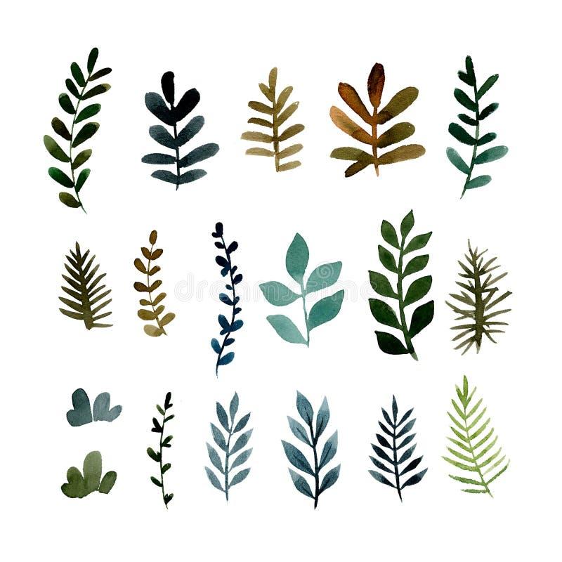 Metta dei rami verdi differenti delle piante royalty illustrazione gratis
