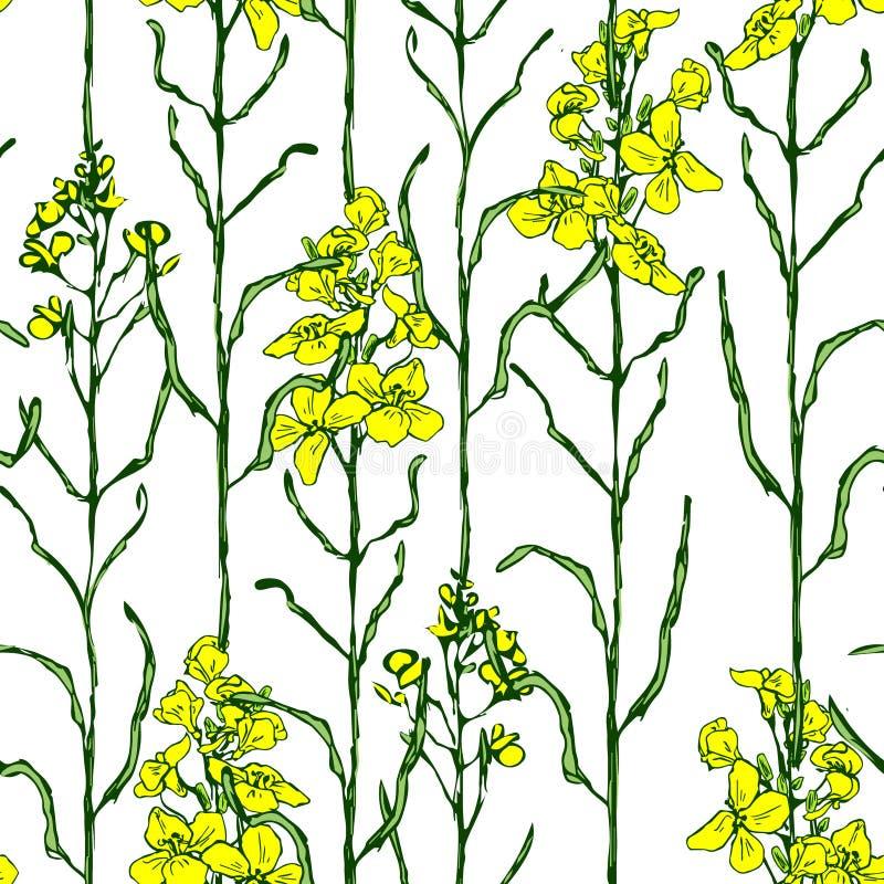 Metta del fiore e dell'olio del canola illustrazione vettoriale