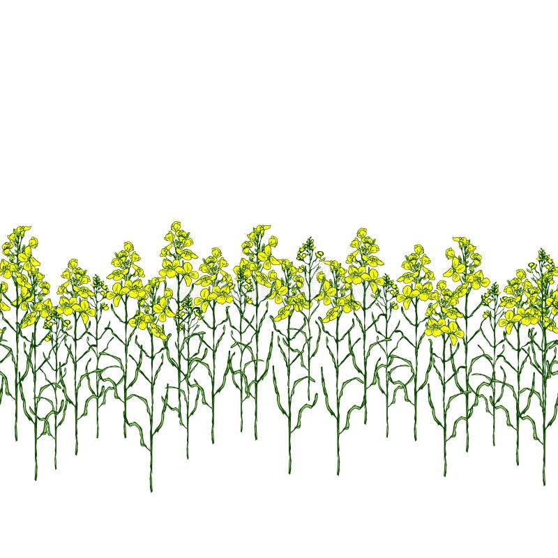 Metta del fiore e dell'olio del canola royalty illustrazione gratis