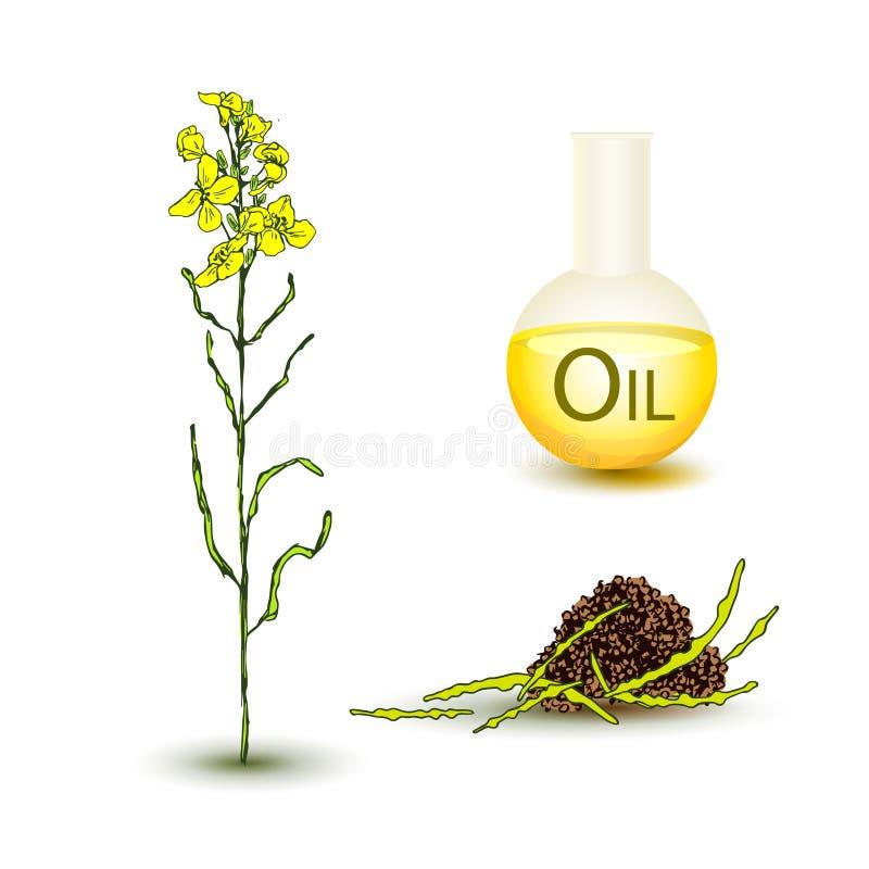 Metta del fiore e dell'olio del canola illustrazione di stock