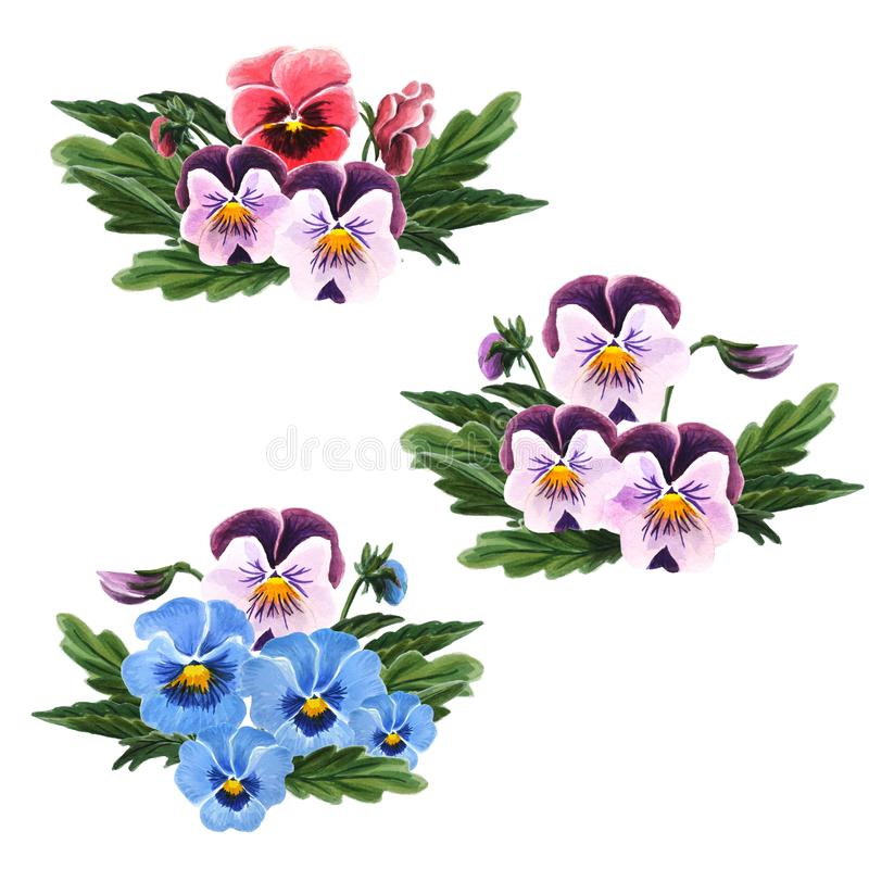 Metta del mazzo di viole del pensiero isolato su un fondo bianco Illustrazione botanica dell'acquerello disegnato a mano illustrazione vettoriale