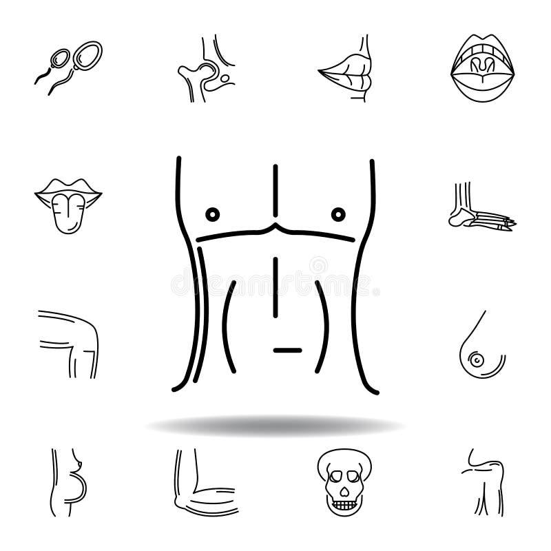 metta dell'icona del profilo del petto degli uomini degli organi umani I segni ed i simboli possono essere usati per il web, logo illustrazione di stock