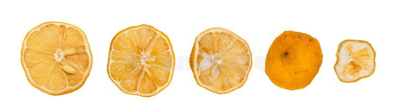 Metta della fetta giallo arancione secca con buccia isolato immagini stock libere da diritti