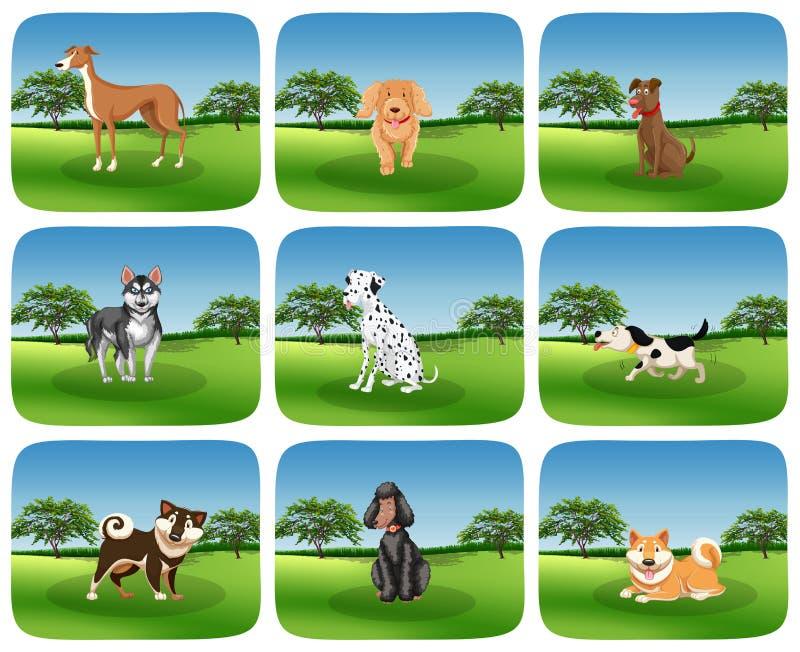 Metta della razza del cane in natura royalty illustrazione gratis