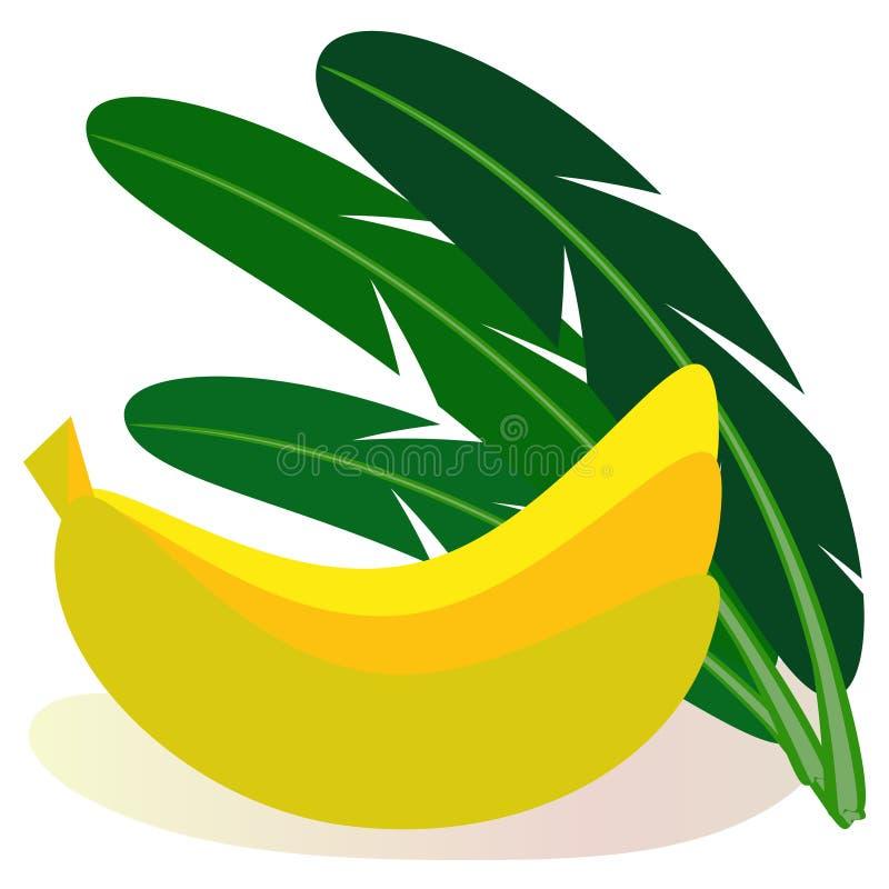 Metta delle banane di frutti tropicali e delle foglie della palma della banana illustrazione di stock