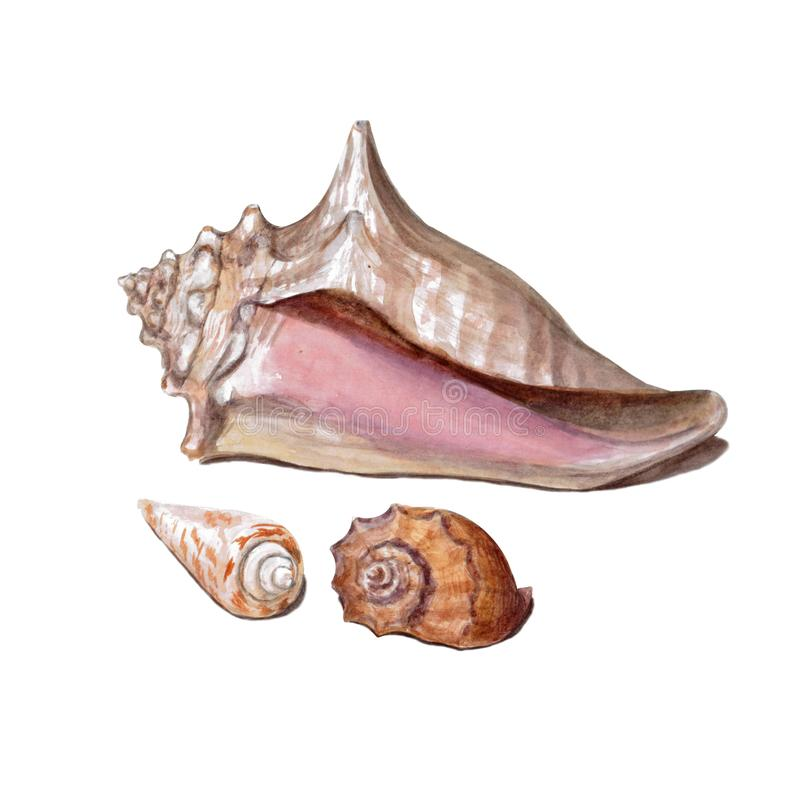 Metta delle conchiglie variopinte differenti isolate su un fondo bianco Bella illustrazione dell'acquerello sul tema marino illustrazione di stock