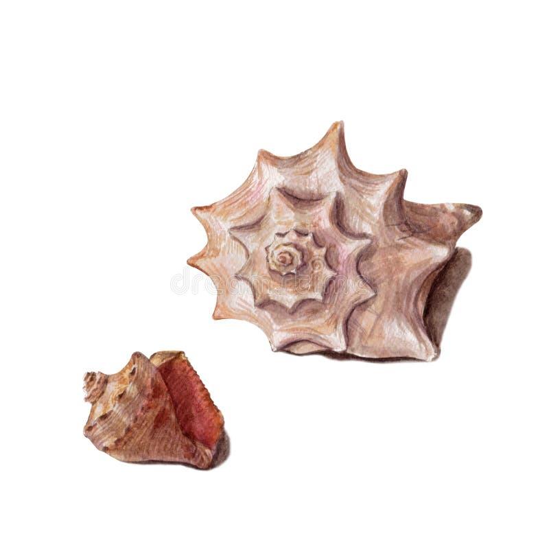 Metta delle conchiglie variopinte differenti isolate su un fondo bianco Bella illustrazione dell'acquerello sul tema marino illustrazione vettoriale