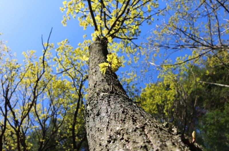 Metta delle foglie e dei rami verdi dell'albero immagini stock libere da diritti