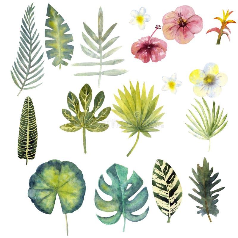 Metta delle foglie tropicali variopinte dell'acquerello clipart 17 illustrazione di stock