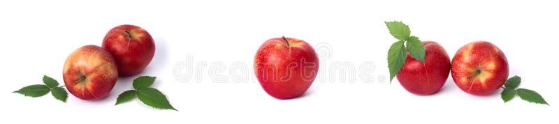 Metta delle mele rosse su un fondo bianco Mele succose di colore rosso con le macchiette gialle su un fondo bianco La composizion fotografia stock libera da diritti