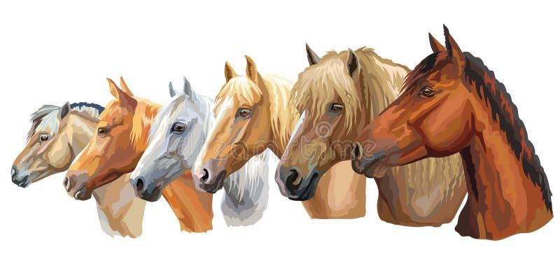 Metta delle razze 5 dei cavalli illustrazione vettoriale
