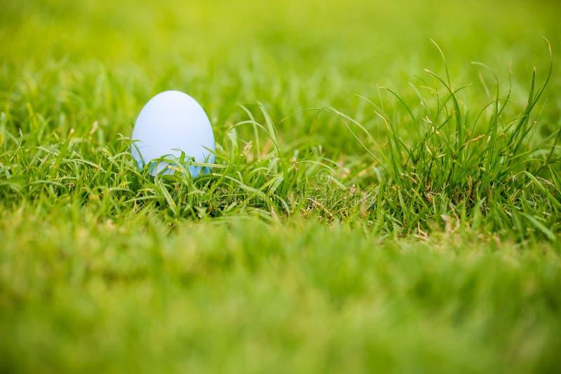 Metta a fuoco variopinto un uovo di Pasqua sul campo di erba Uovo del mangiatore sul giardino segno del festival di giorno del `  fotografia stock libera da diritti