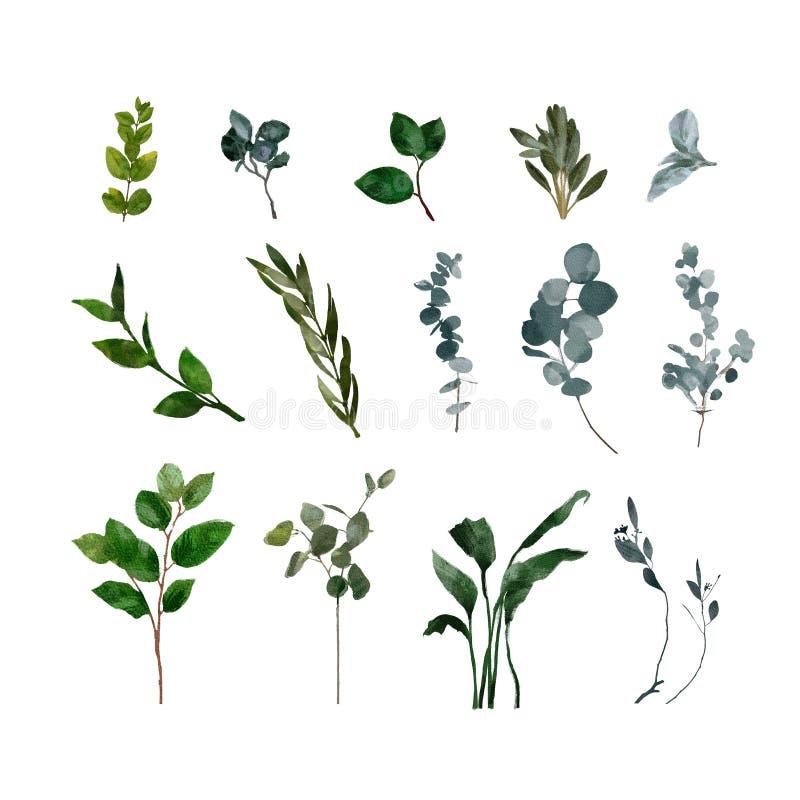 Metta gli elementi dell'acquerello - le erbe, la foglia, fiori giardino della raccolta ed erba selvaggia, foglie, rami, illustraz illustrazione di stock
