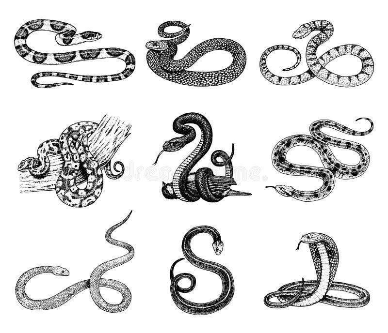 Metta il serpente della vipera cobra e pitone del serpente, anaconda o vipera, reali inciso disegnato a mano nel vecchio schizzo, illustrazione di stock