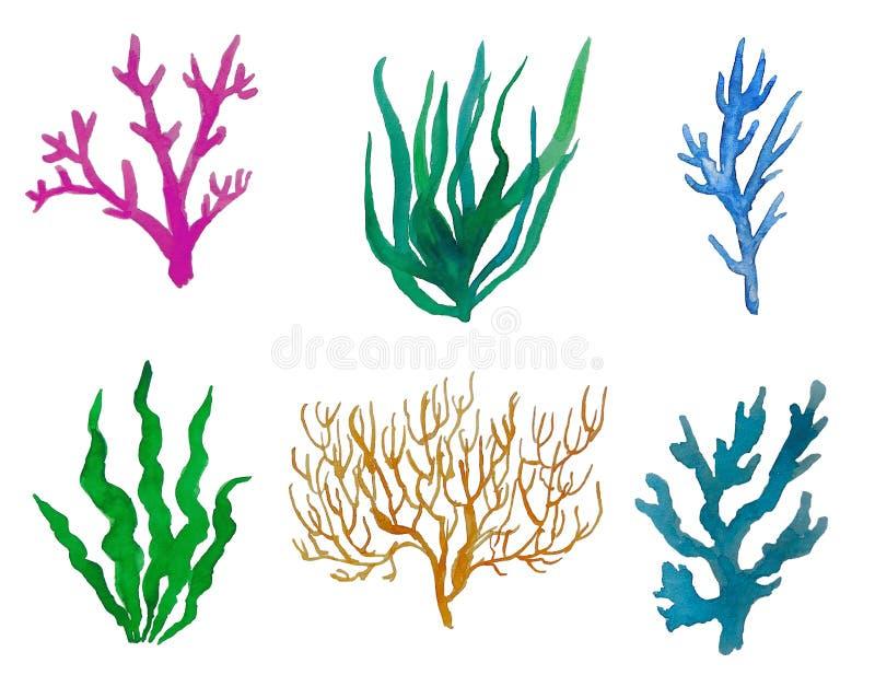 Metta l'acquerello dei coralli illustrazione di stock