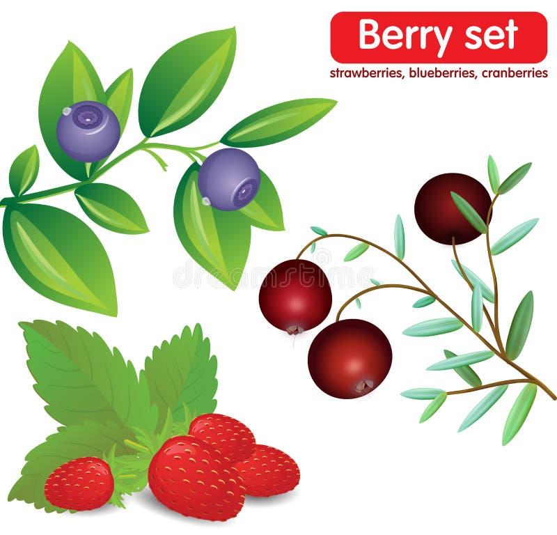 Metta le bacche, i mirtilli, le fragole, cranberrie illustrazione di stock