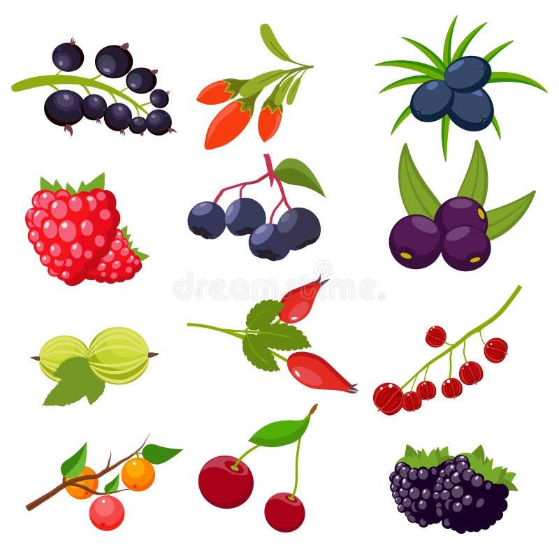 Metta le bacche isolate su fondo bianco: ribes, ciliegia, lamponi, sorba, uva spina, rosa canina, mora, goji illustrazione vettoriale