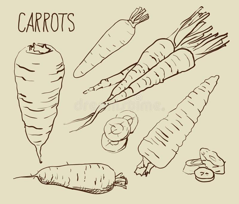 Metta le carote isolate su fondo bianco illustrazione di stock
