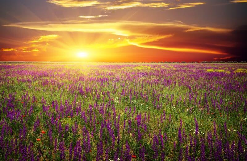 Mettez en place avec l'herbe, les fleurs violettes et les pavots rouges photos stock