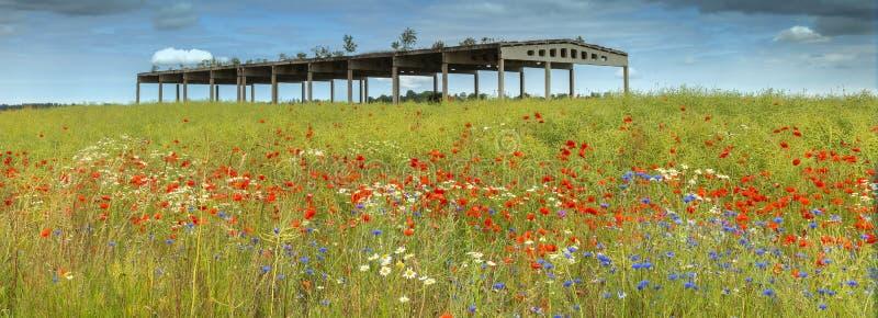 Mettez en place avec les fleurs de floraison et le bâtiment abandonné d'agriculture image stock