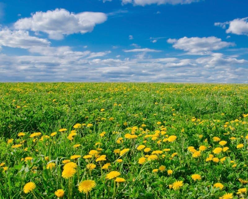Mettez en place avec les pissenlits de floraison un jour ensoleillé image stock