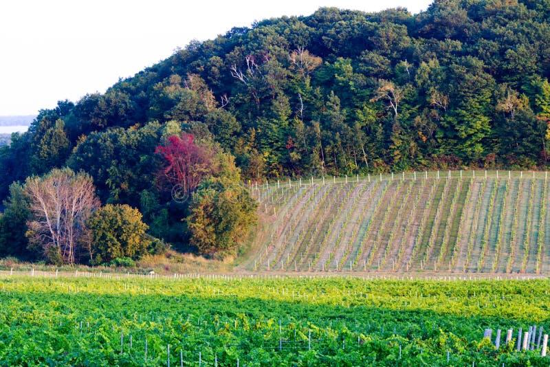 Mettez en place dans le pays d'un vignoble dans Oka, Québec image stock