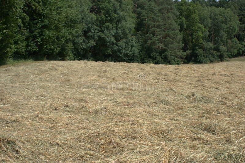 Mettez en place où le foin de coupe s'étend au soleil pour sécher, avec la forêt à l'arrière-plan photographie stock libre de droits