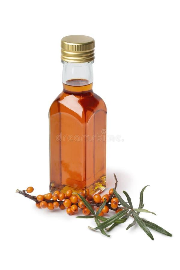 Mettez l'huile en bouteille d'argousier avec une brindille de mer-nerprun commun image libre de droits