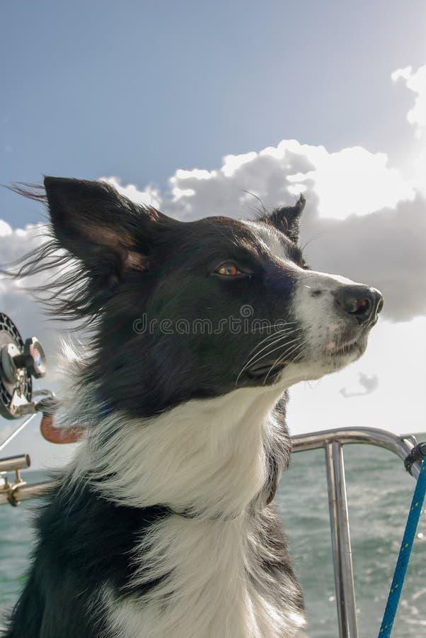 Meu cão é orgulhoso estar no barco imagens de stock royalty free