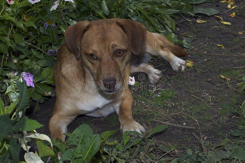 Meu cão agradável em meu jardim fotografia de stock royalty free