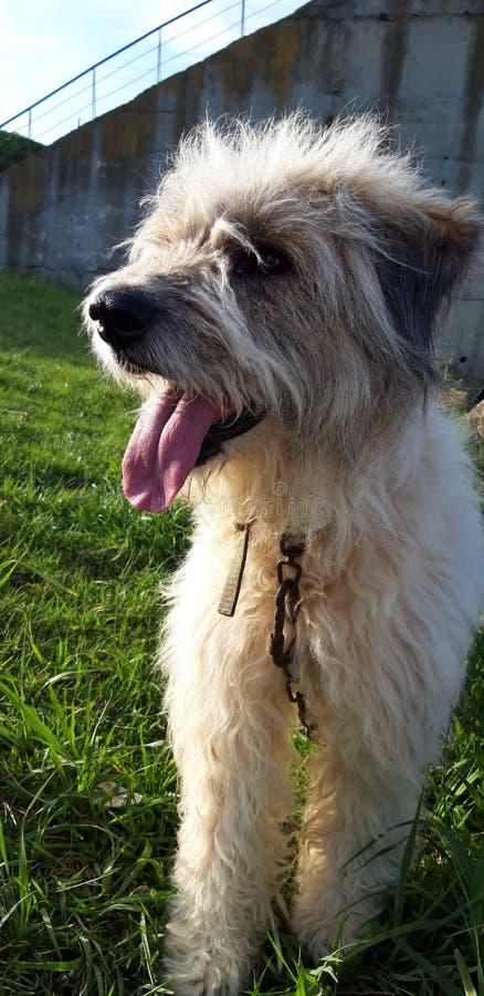 Meu cão loial fotografia de stock royalty free