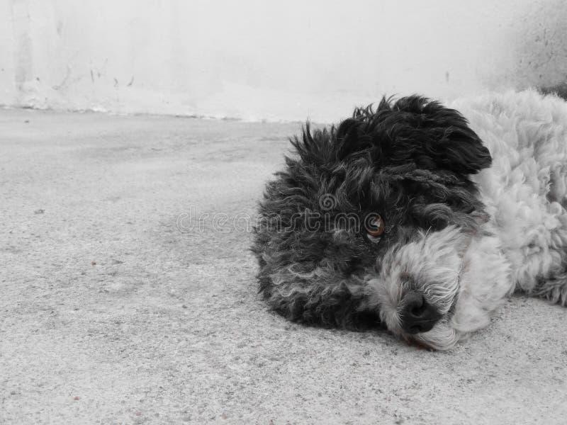 Meu cão pequeno Menino considerável foto de stock royalty free
