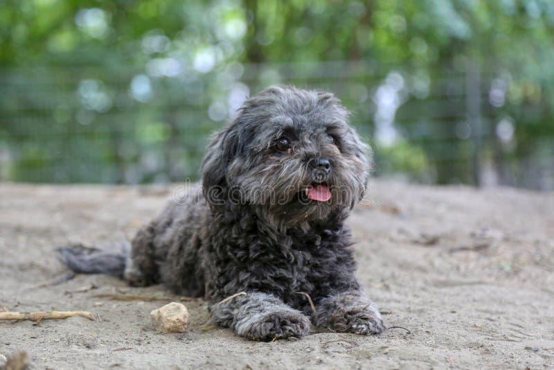 Meu cão preto pequeno no parque imagens de stock royalty free