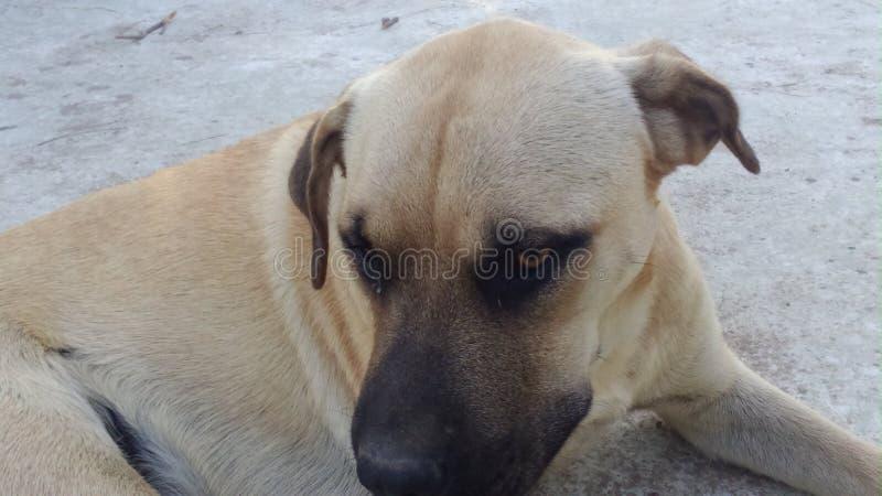 Meu cão real foto de stock royalty free