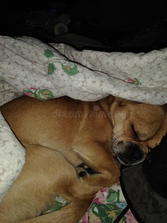 Meu cachorrinho bonito imagens de stock royalty free
