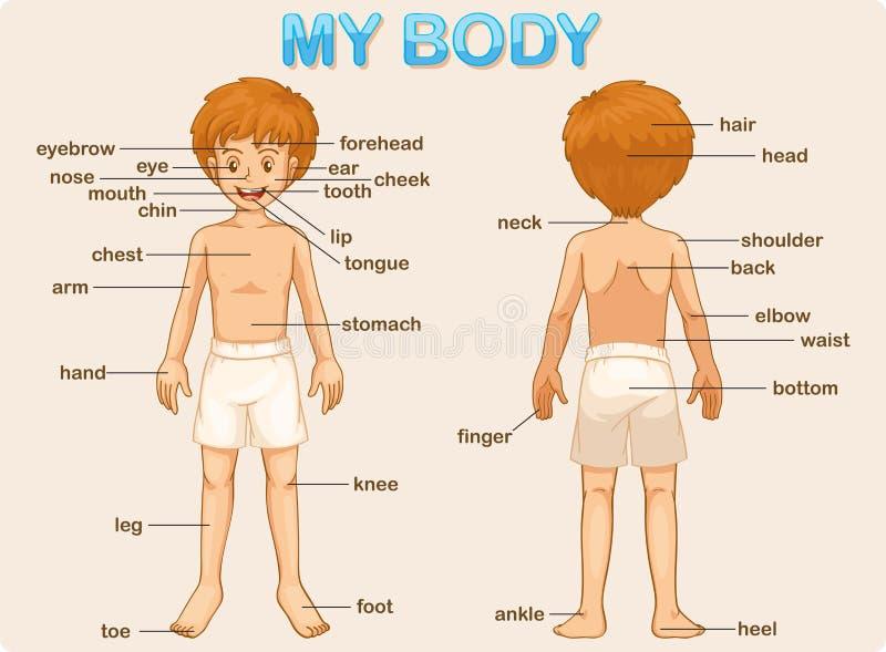 Meu corpo ilustração do vetor