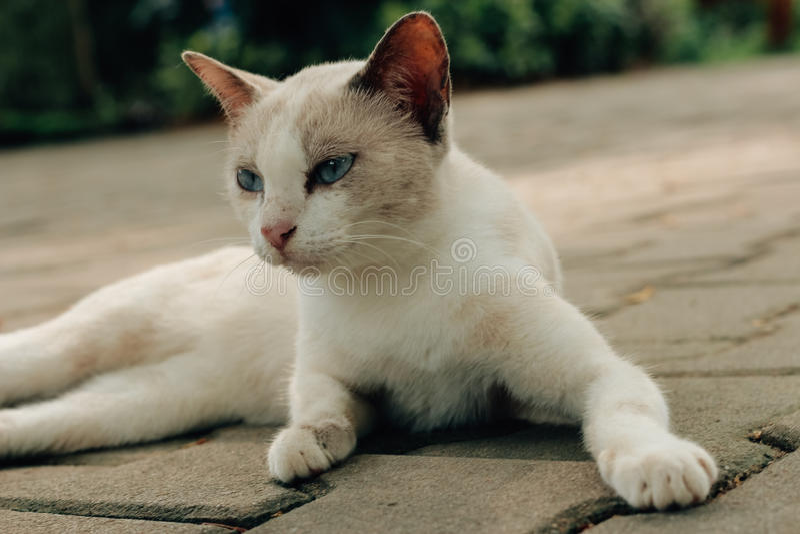 Meu gatinho pequeno imagem de stock