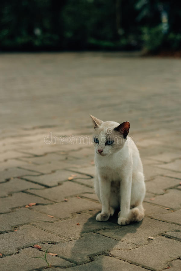 Meu gatinho pequeno fotografia de stock